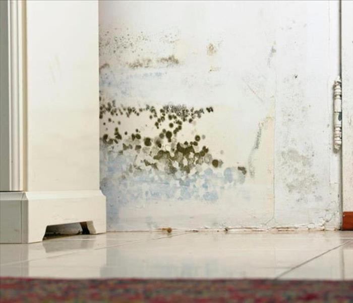 Mold Remediation Federal Way Residents: Follow These Mold Safety Tips If You Suspect Mold